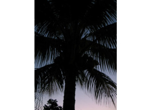 palm-silhouette